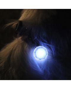 PetLit LED -pantavalo