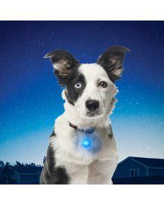 SpotLit LED -pantavalo, eri värejä